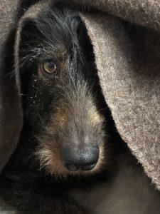 Dit is wel een leuke foto, maar voor een volledig portret heb ik toch iets meer hond nodig.