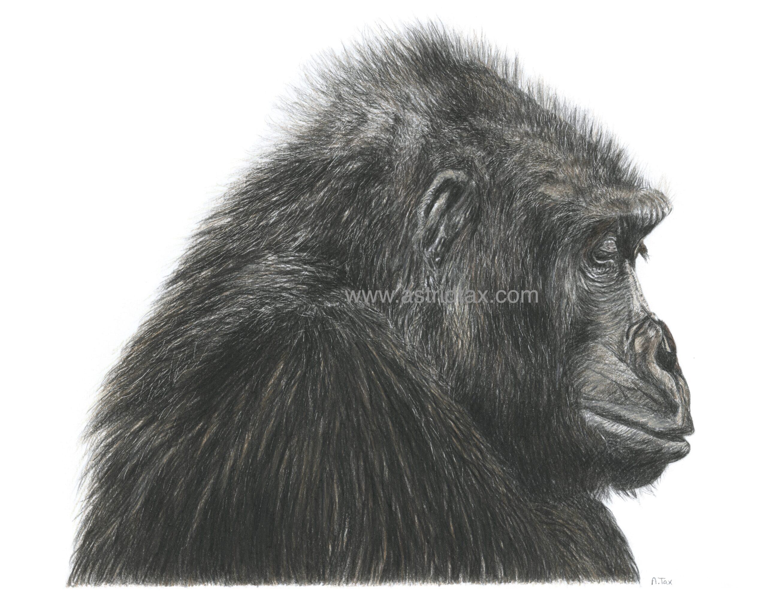 Gorilla met tekst